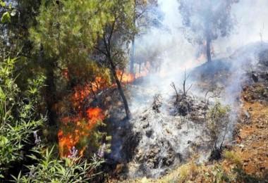 Hizan'da çıkan yangında 3 bin dönüm orman kül oldu