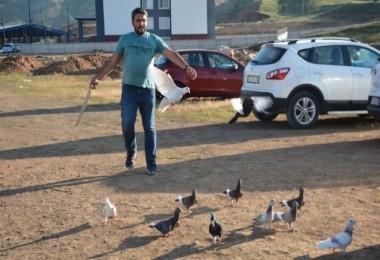 Hız ve posta güvercinleri üzerine çalışma yürütüyor