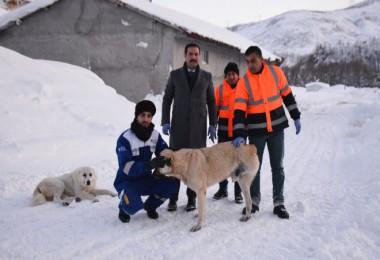Tatvan'daki hayvanlar için doğaya 1000 kilogram yem bırakıldı