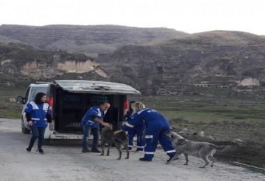 Tatvan Belediyesi Hayvan Kısırlaştırma ve Rehabilitasyon Merkezi bölgeye hizmet ediyor