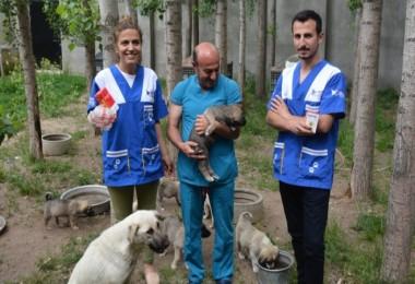HAYTAP ile İmuneksfarma Bitlis'teki sokak hayvanları için ilaç gönderdi