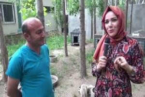HAYTAP ile İmuneksfarma Bitlis'teki sokak hayvanları için ilaç gönderdi - Bitlis Bülten
