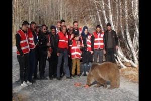 Nemrut'taki ayılar kavurma ile beslendi - Bitlis Bülten