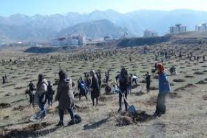 Bitlis'te fidan dikimine büyük katılım - Bitlis Bülten